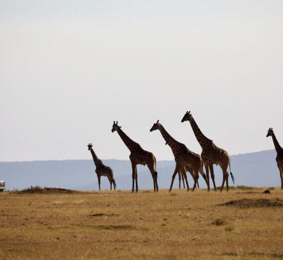 Tanzania reizen: de beste nationale parken